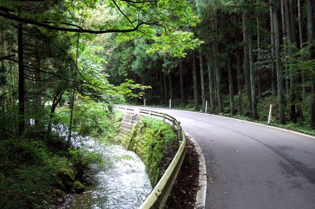 宮城県~岩手県の森林.jpg